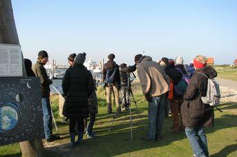 Auf Vogelkiek - Exkursion zur Baltrumer Vogelwelt. Bitte anmelden!