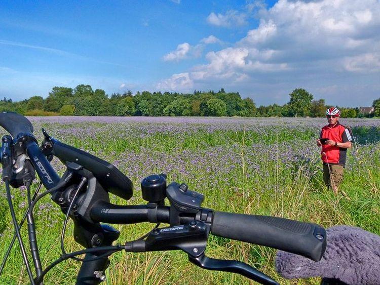 5095 Blumenwiese auf einer Radtour durch Nord.1024