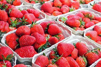 Halsbeker Erdbeeren